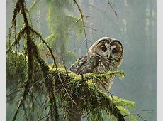 A Wise Old Owl Y Coloring Pages