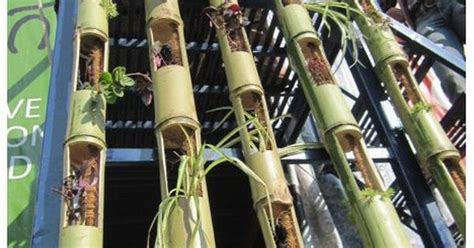 Bamboo Vertical Garden Vertical Gardening With Slotted Bamboo Ideas For The
