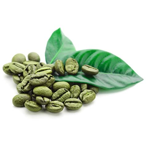 Coffe Green green coffee bean extract green coffee benefits