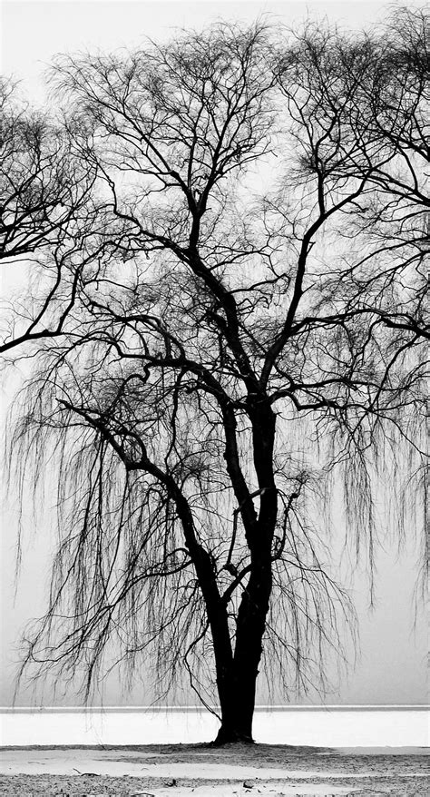 landscape trees black  white wallpapersc iphonesplus