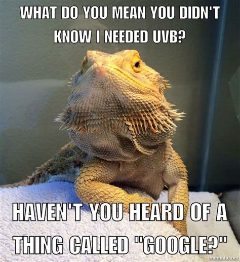 Bearded Dragon Meme - uvb get it reptile funnies pinterest
