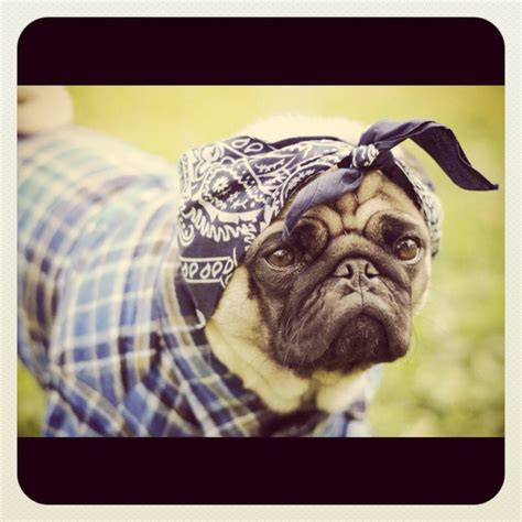 pug thug thug pug stuff that makes me smile