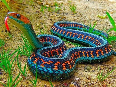 25 best ideas about snake reptile on pinterest snakes