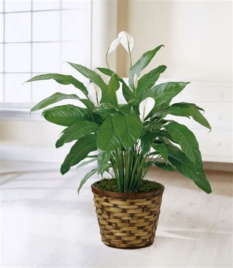 good plants for office 8 plants that make for a clean and happy office