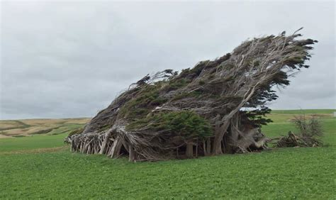 twisted trees of slope point new zealand our planet