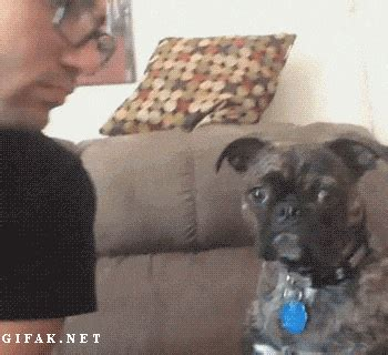 funny animal gifs part   gifs funny