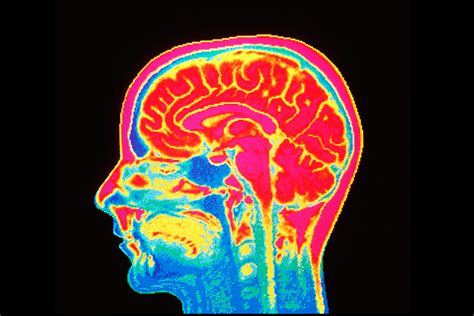 Brains Not Is Wired The Entertainment by Study Finds Pedophiles Brains Wired To Find Children
