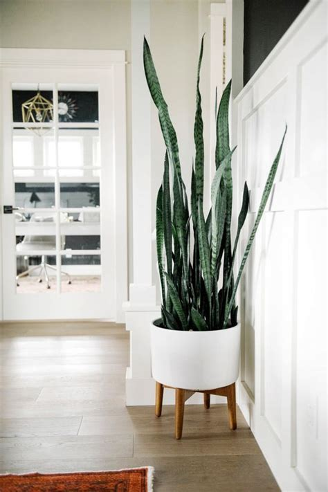 home interior plants 17 best ideas about indoor plant decor on pinterest plant decor plants indoor and botanical decor