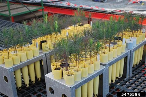 backyard nursery backyard gardener growing native trees from seed