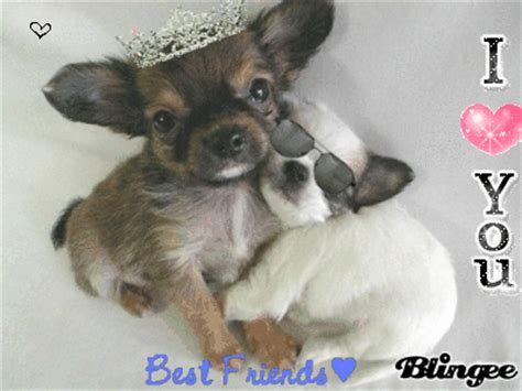 bff puppies bff puppies picture 48598297 blingee
