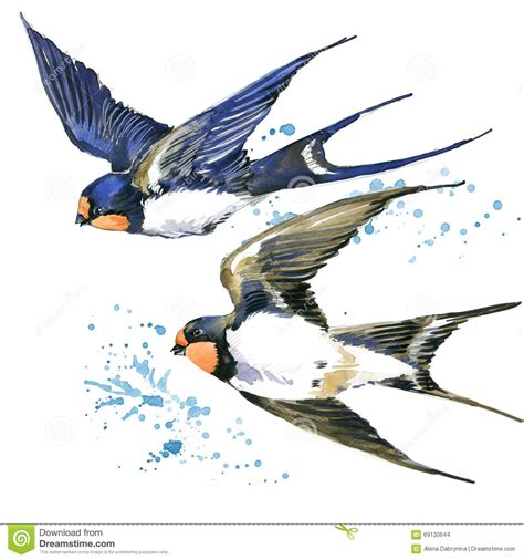 swallow swallow watercolor illustration stock
