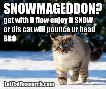 Lol Cat Meme - lolcat meme