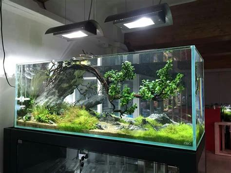 aquascaping tropical fish tank 1000 images about aquarium fish tank aquascape
