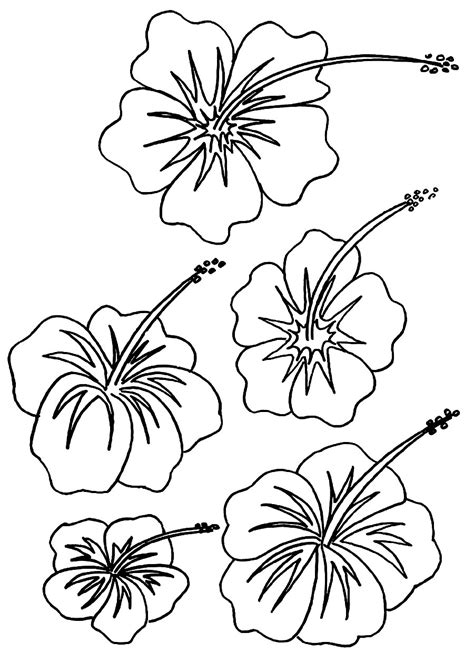 coloring pages printable flowers free printable hibiscus coloring pages for kids