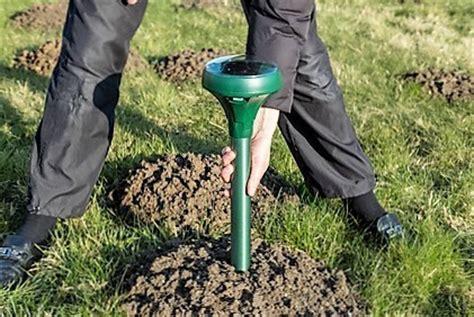 eliminare le talpe in giardino come eliminare le talpe scaccia talpe solare weitech