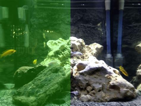 Algaelang The Algae Killer algae crispy clean aquariums