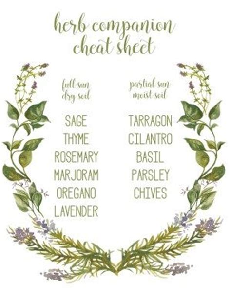 herb grower s cheat sheet 1000 images about witches garden on pinterest gardens