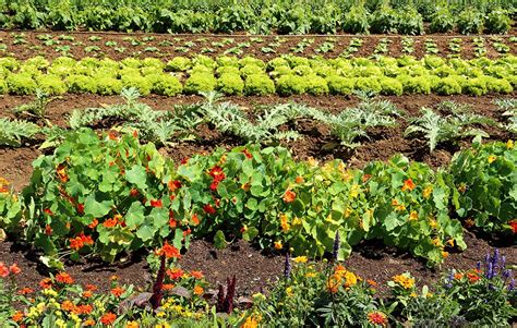 Why You Should Always Plant Flowers In Your Vegetable