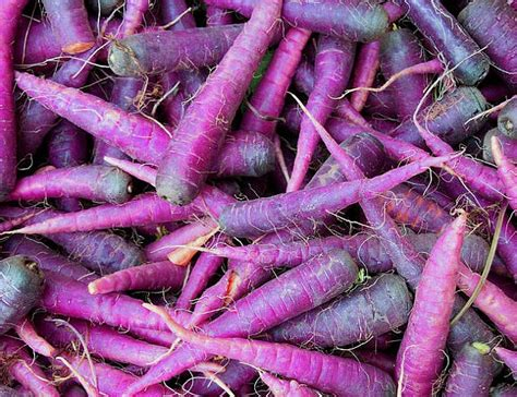 wtf purple carrots incredible things