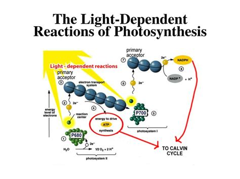 What Are The Products Of Light Dependent Reactions by 425 Best All Things Chemical Images On