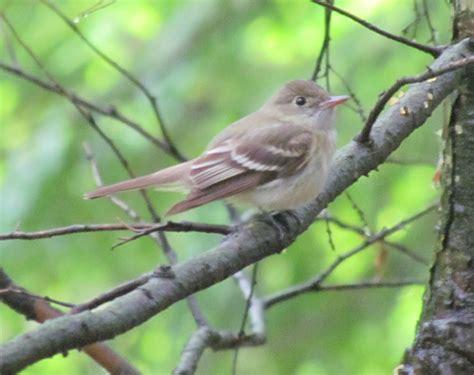 northeast ohio birds help me identify a bird whatbird