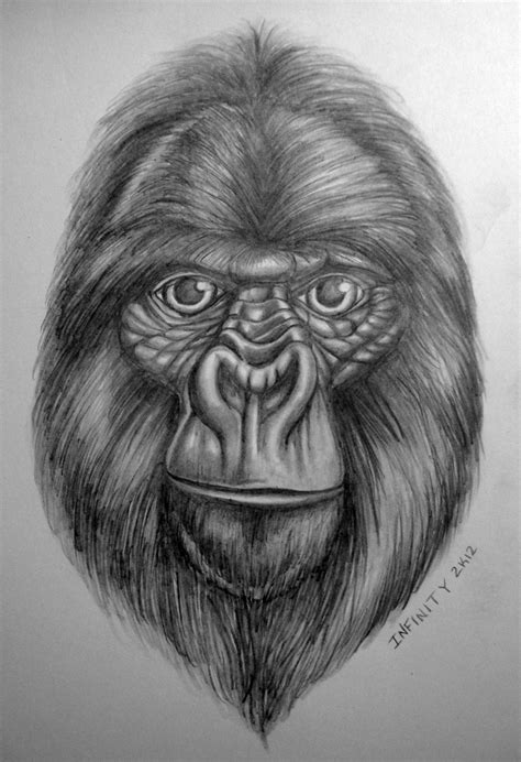 Drawing W Pencil by Gorilla Pencil Sketch W Shading By Diamonicus On Deviantart