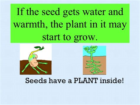 Did K Fed Plant One Last Seed by How Do Plants Grow And Change Chap 2