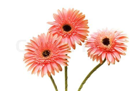 Flower Box Murah Jakarta Florist 3 three flowers isolated on the white background stock photo colourbox