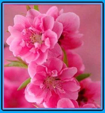 imagenes bonitas watsapp las mejores imagenes bonitas imagen con frases de amor