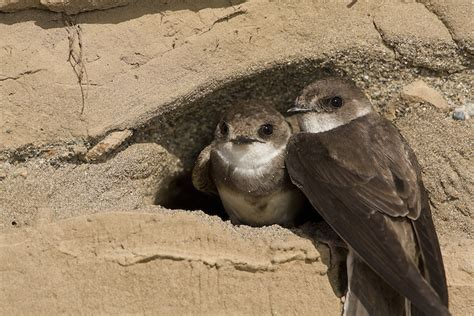 nesting season showcases variety in bird homes wintu