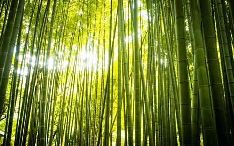 imagenes wallpaper bamboo bamboo full hd wallpaper and background image 1920x1200