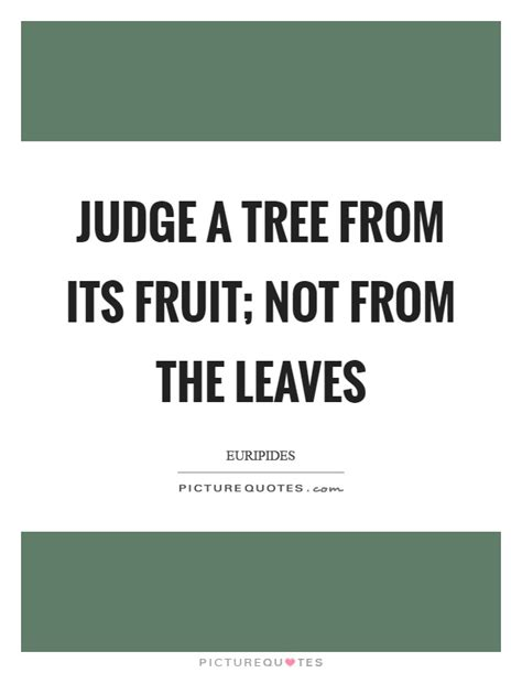 judge a tree by its fruit judge a tree from its fruit not from the leaves picture