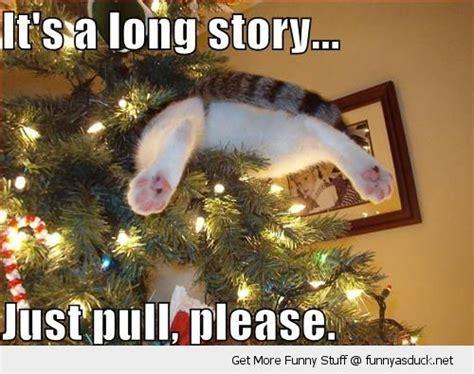 Christmas Animal Meme - funny and wild animals funny animals for christmas