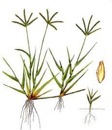 Su Rumput rumput grinting rumput
