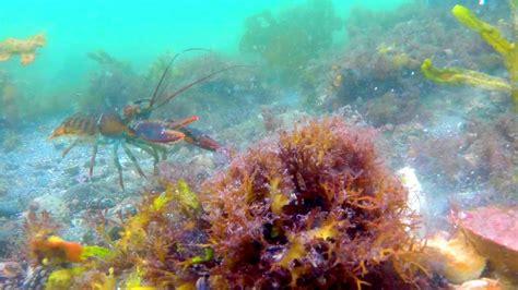 Crabs Lobster   Ocean Floor Gopro  Water