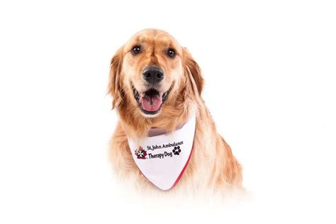 for therapy dogs can your be a therapy