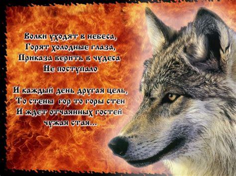 Картинки цветные волки