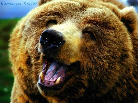Bears Smile smiley bears