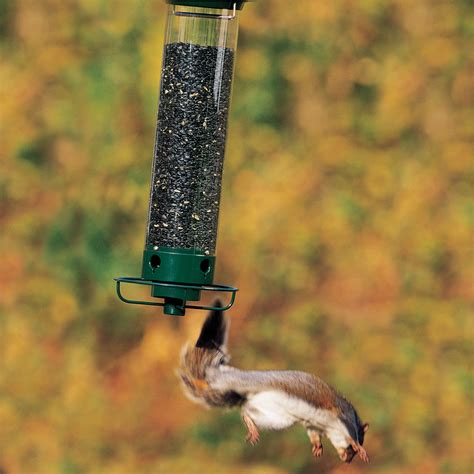 deter squirrels with droll yankees bird feeder squirrel