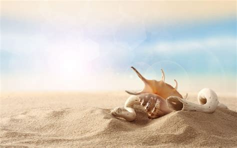 sea shells wallpapers wallpaper cave
