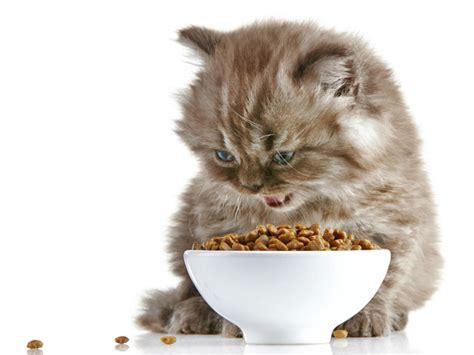 alimentazione gatti piccoli svezzamento dei gattini