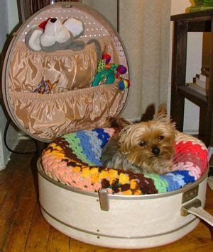yorkie benadryl dosage 21 best images about yorkies sweet yorkies on vintage suitcases vintage