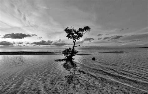 imagenes en blanco y negro tristes fondo pantalla paisaje blanco y negro