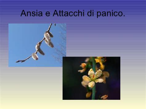attacchi di panico e fiori di bach ansia e fiori di bach