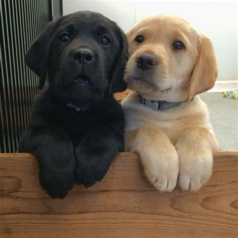 best puppies 17 pictures of puppy best friends