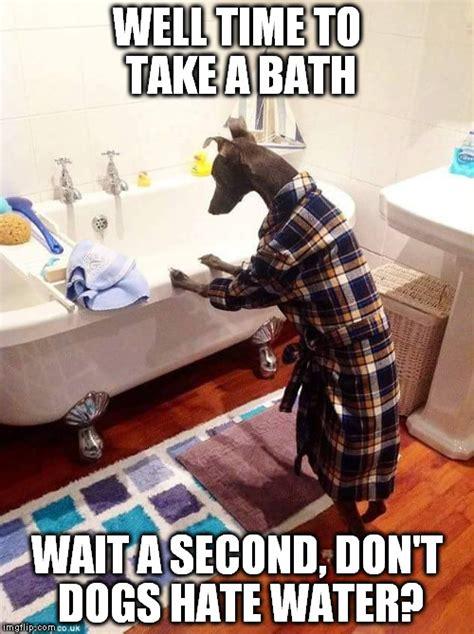 Bath Meme - dog taking a bath imgflip