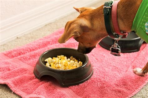 dogs eat eggs 25 foods your should never eat
