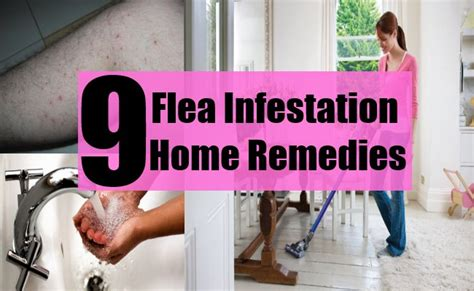 9 flea infestation home remedies treatments