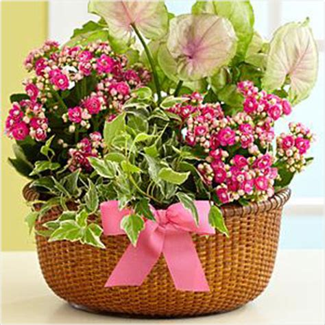 Just Flowers by Beyond Just Flowers Precious Plants For