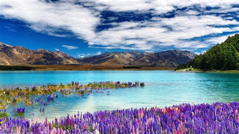 Beautiful Interior Design by The Most Beautiful Photographs Of Lake Tekapo In New